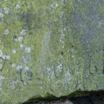 Kobrinksche Sandsteinplatte 3